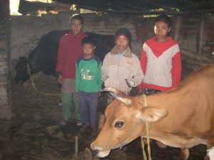 The Tamang family with cows